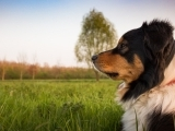 Dog Training: Intro to Manners