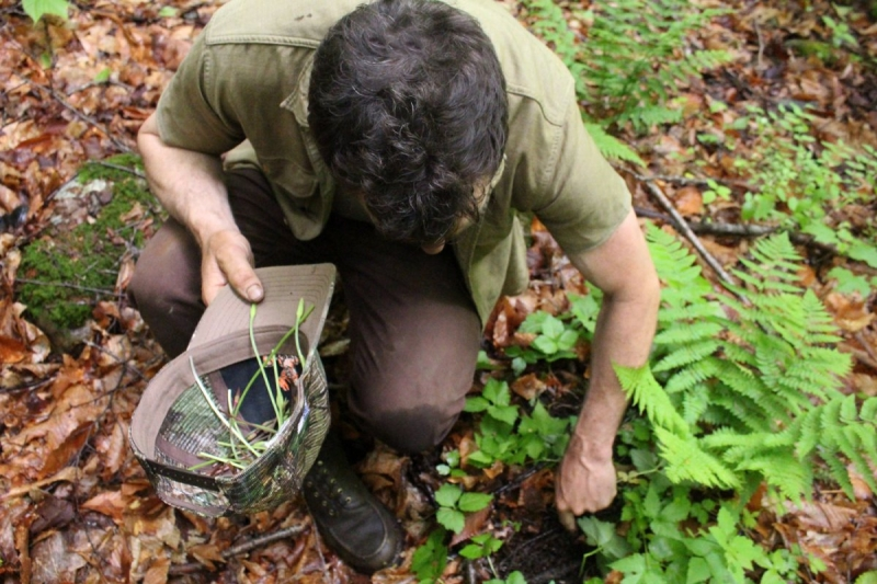 Original source: http://ecohomeideas.com/wp-content/uploads/2014/12/forage-food-edible-guy-picking-plants.jpg