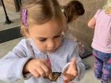Tiny Scientists - Monarch Lab - at Home