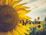 Rustic Sunflower Sign Painting