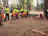 Utility Line Clearance Arborist Training