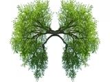 Stop Smoking with Hypnosis - ACH
