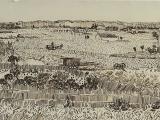 Line Drawing: The Landscape (ONLINE) DR 605EL_ON
