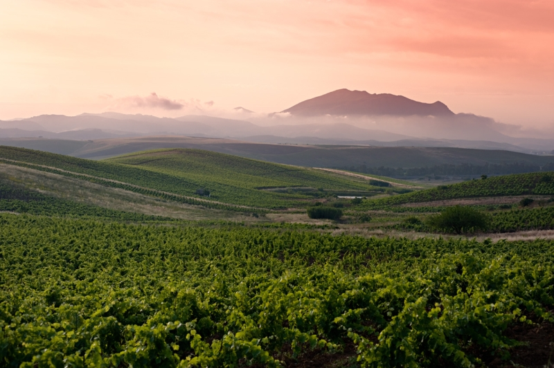 Original source: http://islandermediapros.com/Demo_FarmhouseTable2/wp-content/uploads/2014/05/Sicilian-Vineyards.jpg