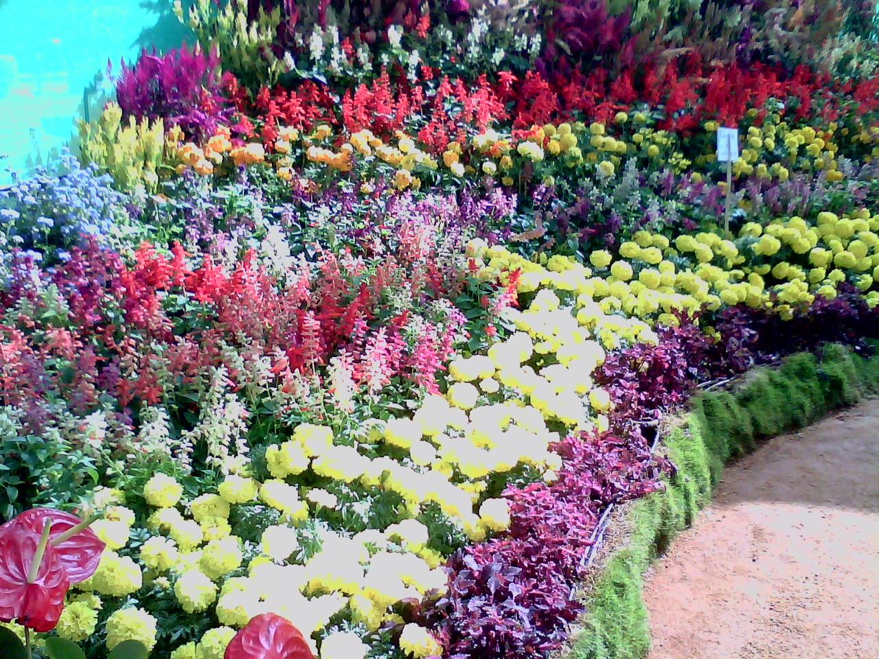 Portland Flower Show Trip