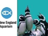 Day Trip to Boston and the New England Aquarium W19