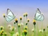 Gardening for the Birds and Butterflies - Torrington