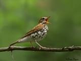 Birding by Ear at Appleton Library