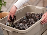 Worm Composting for Beginners