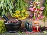 Wild Medicinal Herb Walk