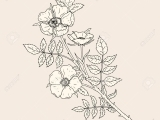 Drawing Freehand Flowers & Leaves PM