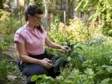Happy Knees & Hips for Gardeners! - Live Online
