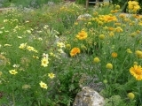 Seven Basic Concepts for Xeriscape and Native Landscaping