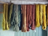 Wild Colors: Natural Dyeing with Local Plants