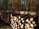 Landowner 101 - Managing Your Woodlot Fall 2018