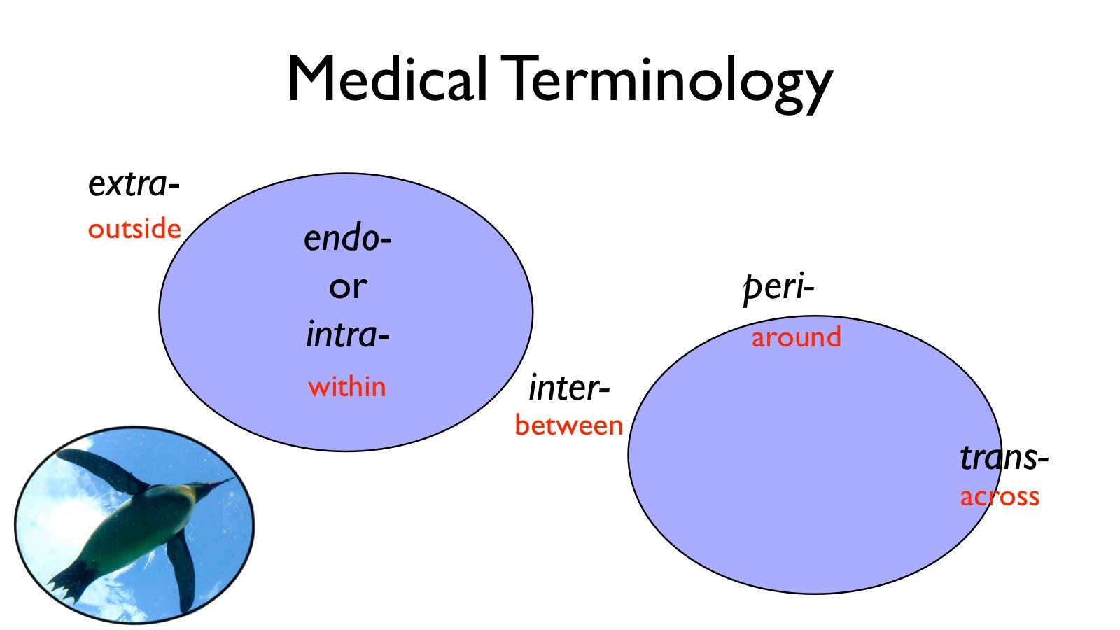 Medical Terminology: A Word Association Approach (Fall 2018)