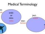 Medical Terminology: A Word Association Approach