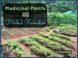 Medicinal Plant Walk