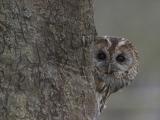 Center for Wildlife: Owls