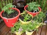 Container Gardening Messalonskee W18