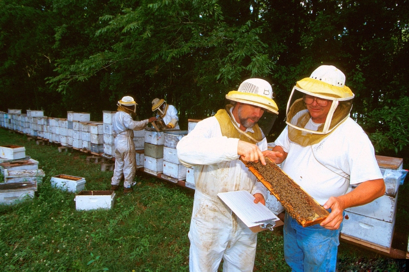 Original source: https://upload.wikimedia.org/wikipedia/commons/thumb/c/c5/Beekeeping_in_Baton_Rouge_1319001-LGPT.jpg/1280px-Beekeeping_in_Baton_Rouge_1319001-LGPT.jpg