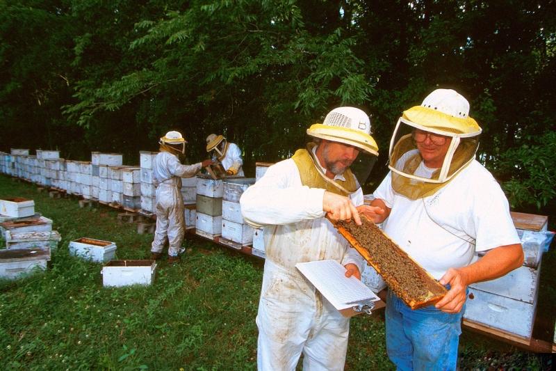 Original source: https://upload.wikimedia.org/wikipedia/commons/thumb/c/c5/Beekeeping_in_Baton_Rouge_1319001-LGPT.jpg/1280px-Beekeeping_in_Baton_Rouge_1319001-LGPT.jpg