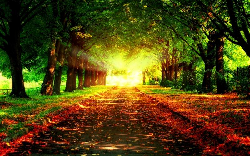 Original source: http://cdn.pcwallart.com/images/pathway-wallpaper-2.jpg