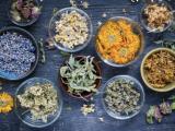 Build a Proven Natural Winter Medicine Chest