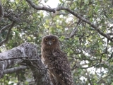 Books-Cheese-Wine with Author Jonathan C. Slaght:  Owls of the Eastern Ice