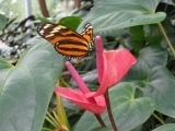 Take Fabulous Photos of the Flora and Fauna in Your World