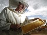 Original source: http://darkroom.baltimoresun.com/wp-content/uploads/2012/07/REU-ENVIRONMENT-BEES_AUSTRIA.jpg