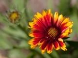 Native Plants for the Home Landscape-Hampden