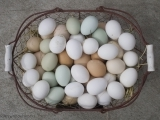 Original source: http://media.treehugger.com/assets/images/2015/10/freeze-eggs.jpg