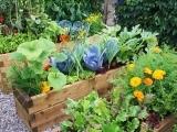 Vegetable Gardening for Newbies Messalonskee W19