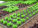 Original source: http://bettergardenideas.com/wp-content/uploads/2014/12/organic-gardening1.png