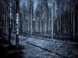 Introduction to Paranormal Phenomena (Online)