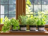 Windowsill Gardening SUPER SATURDAY Spring 2020