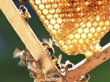 Beekeeping Introductory Session
