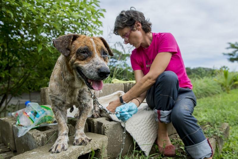 Original source: https://upload.wikimedia.org/wikipedia/commons/thumb/1/1c/Pacific_Partnership_2015_veterinary_personnel_treat_Fijian_pets_at_animal_clinic_150616-F-YW474-182.jpg/1280px-Pacific_Partnership_2015_veterinary_personnel_treat_Fijian_pets_at_animal_clinic_15061