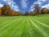 Pesticide Free: Low Input Beautiful Lawns