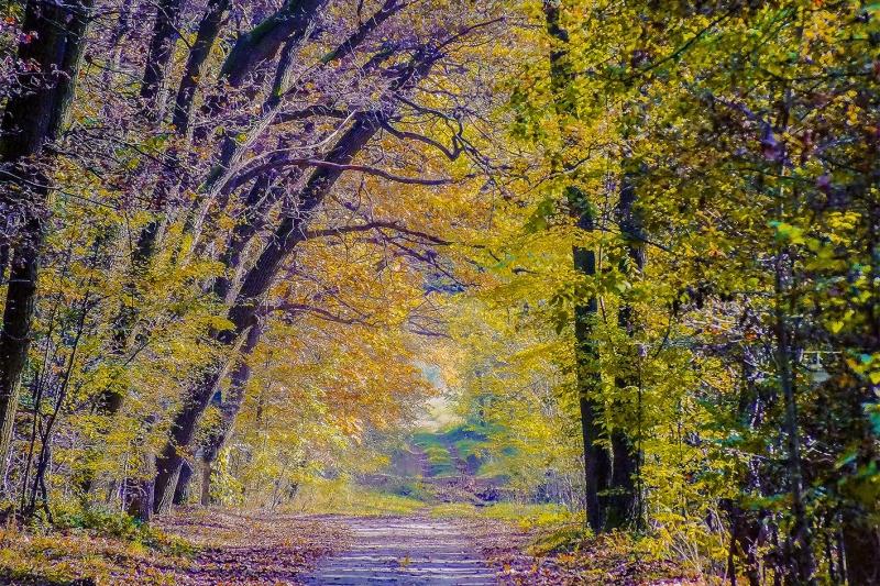 Original source: https://upload.wikimedia.org/wikipedia/commons/d/d7/The_Golden_Light_Of_Autumn_Forest_%28127228175%29.jpeg