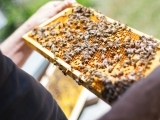 Who Wants to be a Beekeeper? Spring 2020