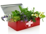 Herbs for your First Aid Kit- Make your own healing salve!