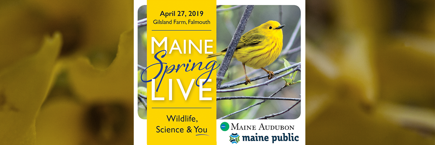 Maine Spring LIVE: Wildlife, Science & YOU!