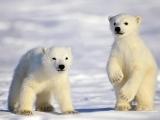 "DNC 12 - Foundations Ballet & Modern 2 - ""Polar Cubs"""