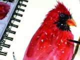 Virtual Watercolor Painting a Red Cardinal ONLINE