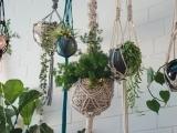 Macrame Hanging Planters W20