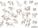 Animal Life Drawing