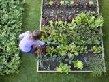 Northwoods Gardening