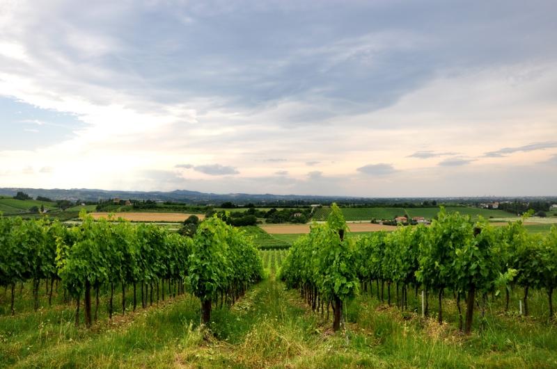 Original source: http://www.made-in-italy.com/files/imagecache/lg/pictures/italian-wine/regions/emilia-romagna-vineyards-landscape.jpg